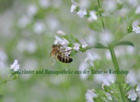 Heilkräuter und Hausapotheke aus der Natur – Workshop