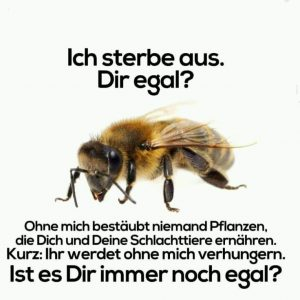 Siebenstern Honig Bienen